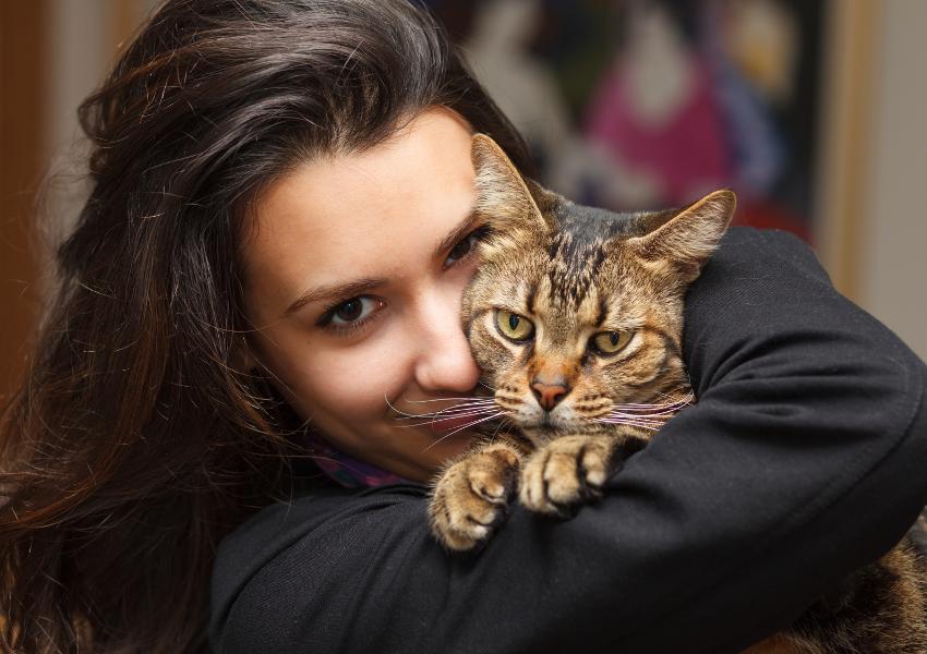 vaccination pour chat et chiens